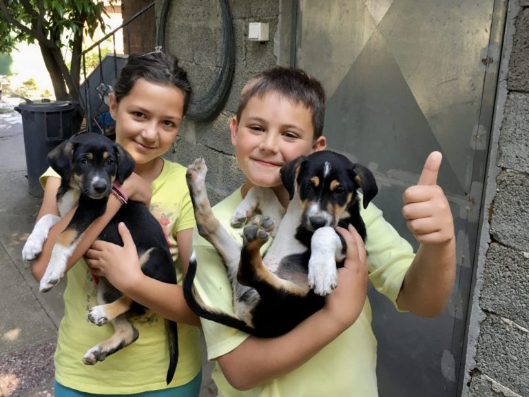 young guests with our puppies